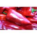 Paprika kapie červená - semena 30ks