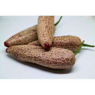 Chilli paprička Jalapeno Farmers - semena 10ks